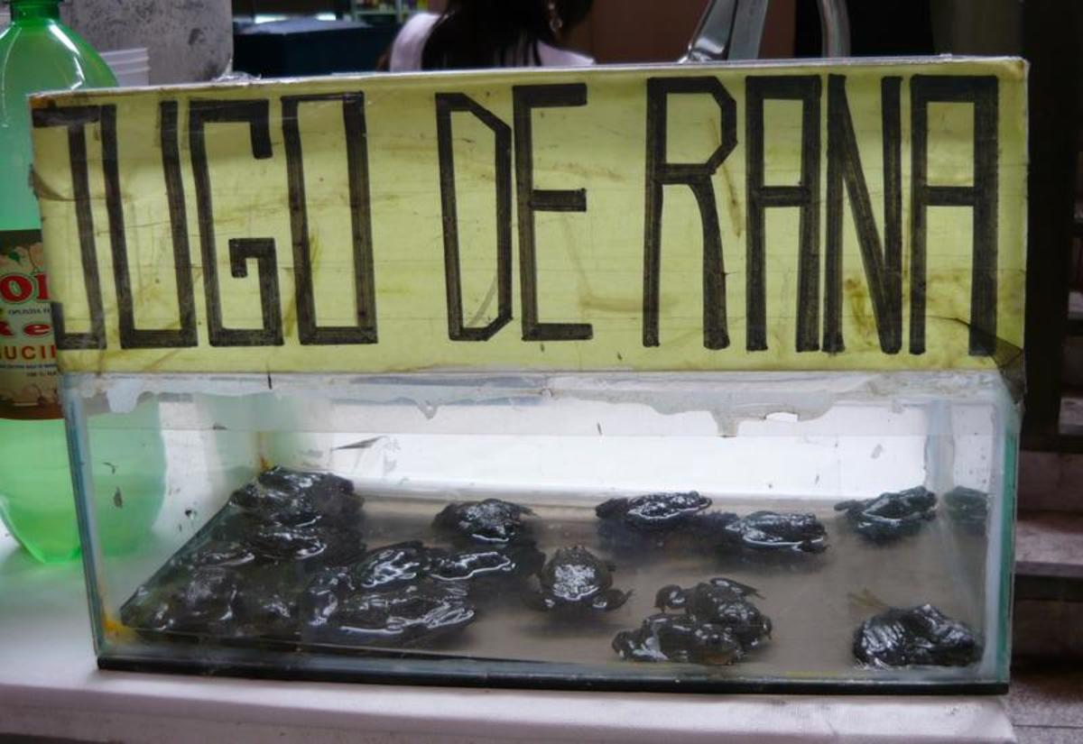 A Peruvian juice vendor displaying a tank of frogs sadly destined for the blender.  Thankfully vendors generally kill, flay and boil the frogs before juicing them.