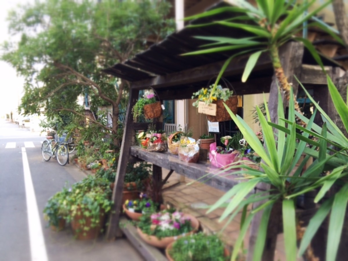 Two blocks away is this charming flower and garden shop.