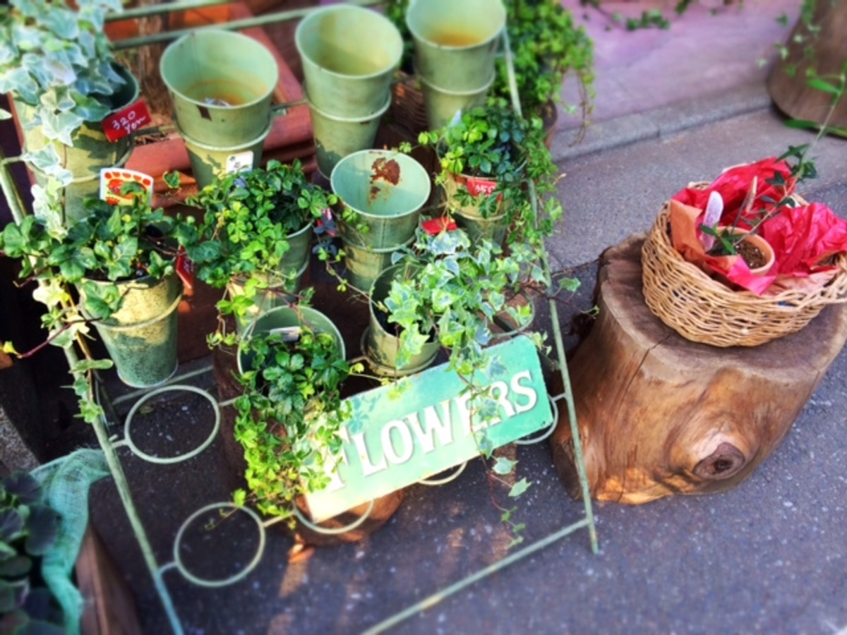 A flower shop and cafe that's hidden and tucked away in one of the back streets of Nogata.