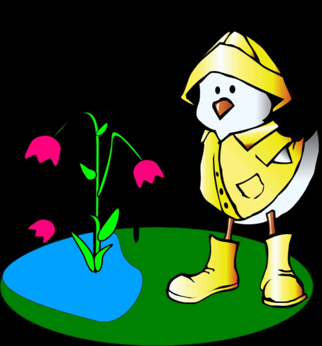Raining on Cartoon Duck and Tulips