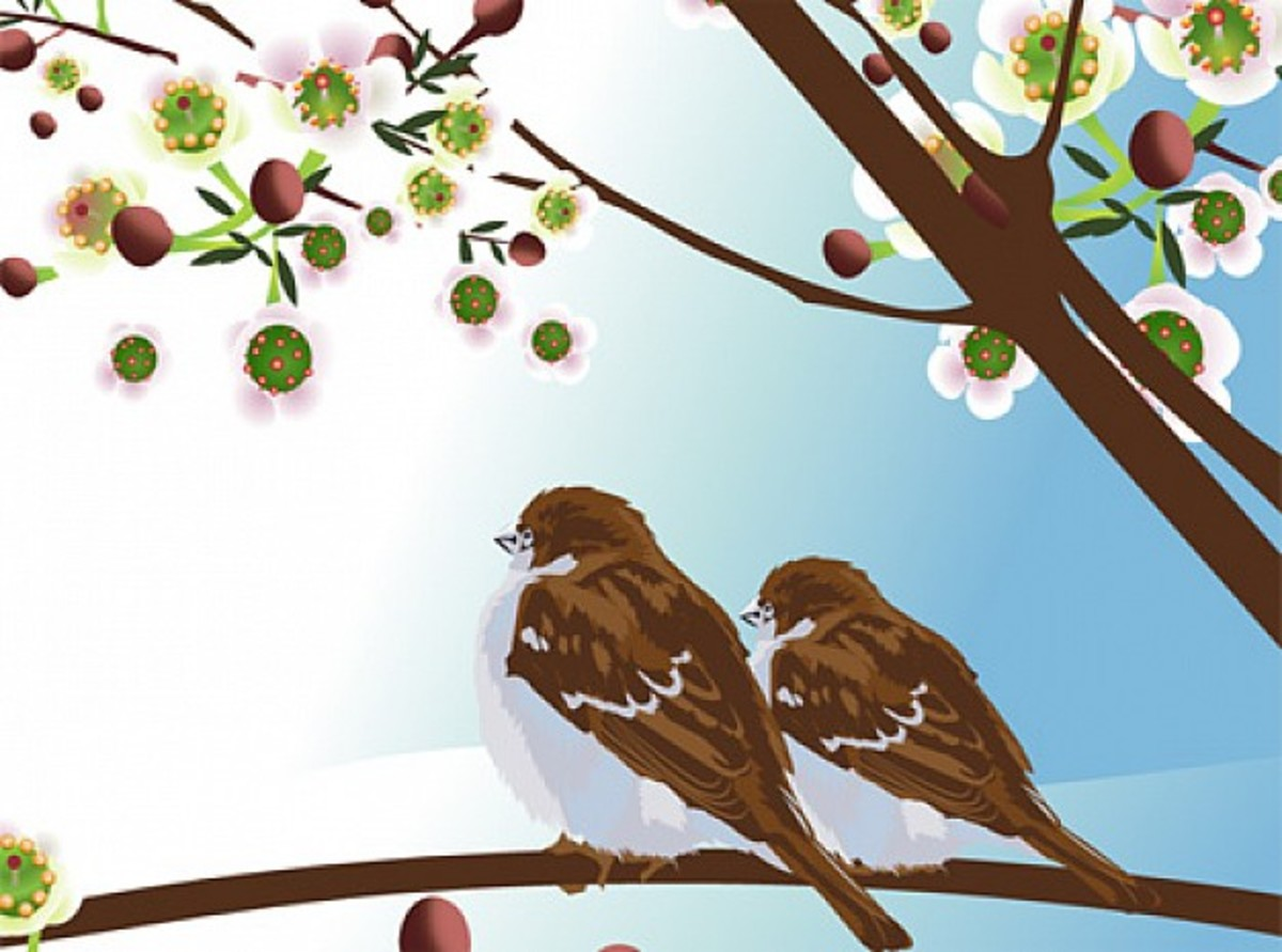 Bird Couple in Blossoming Cherry Tree