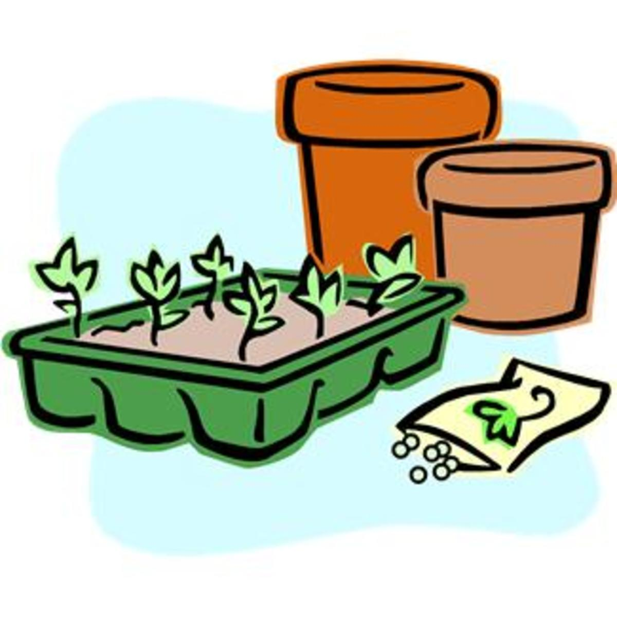Garden Seedlings and Seeds to Plant
