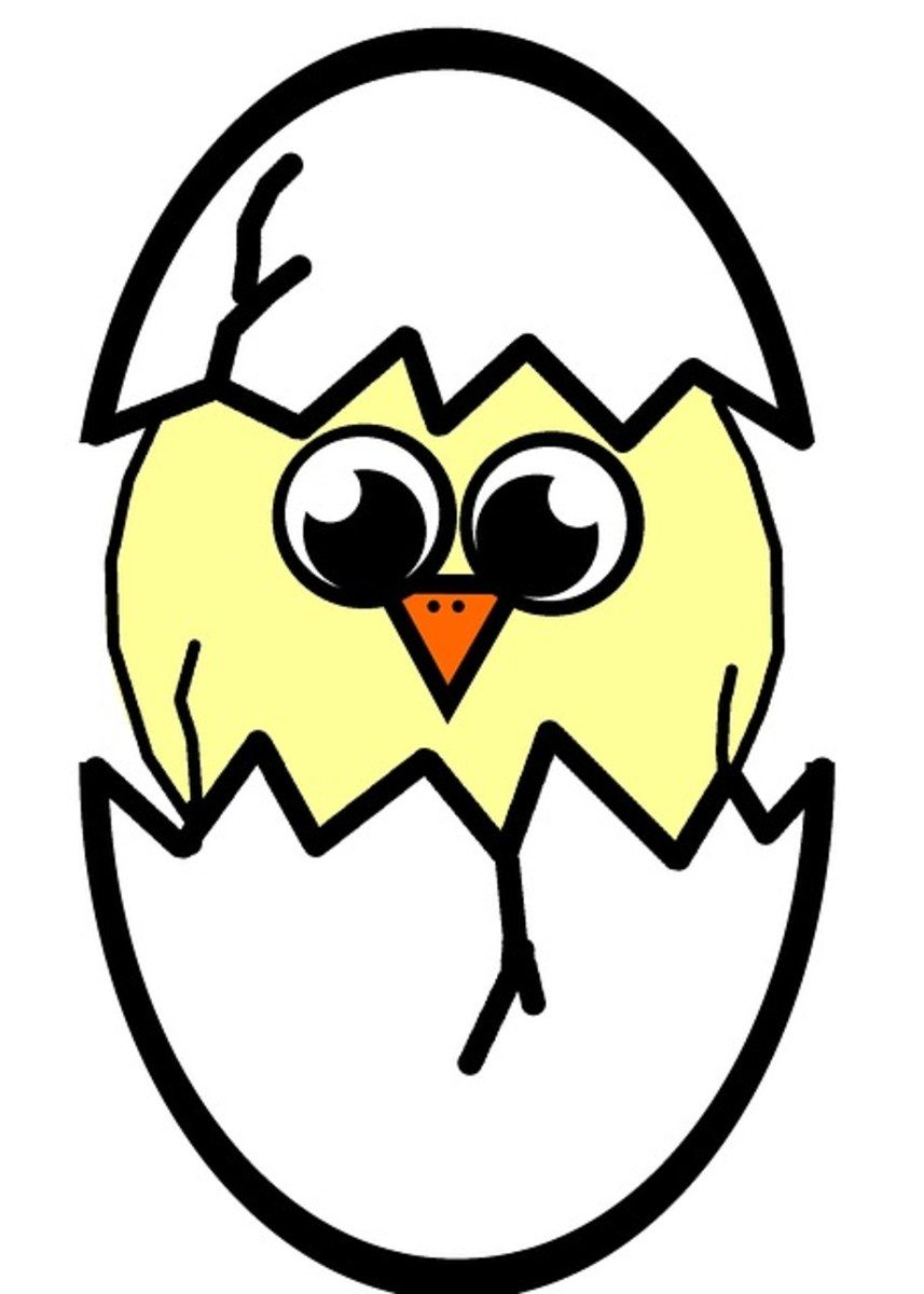 Cartoon Spring Chick Hatching