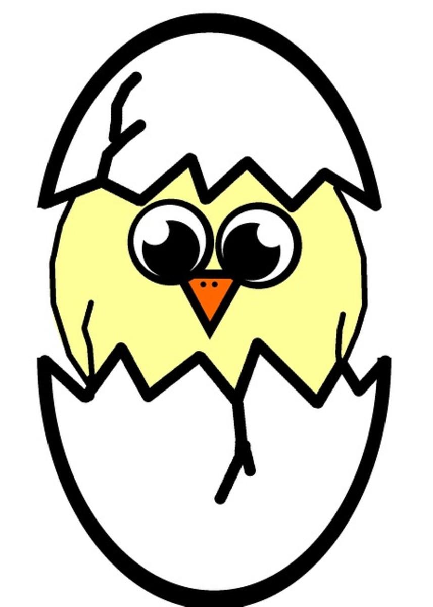 Cartoon Spring Chick Hatching