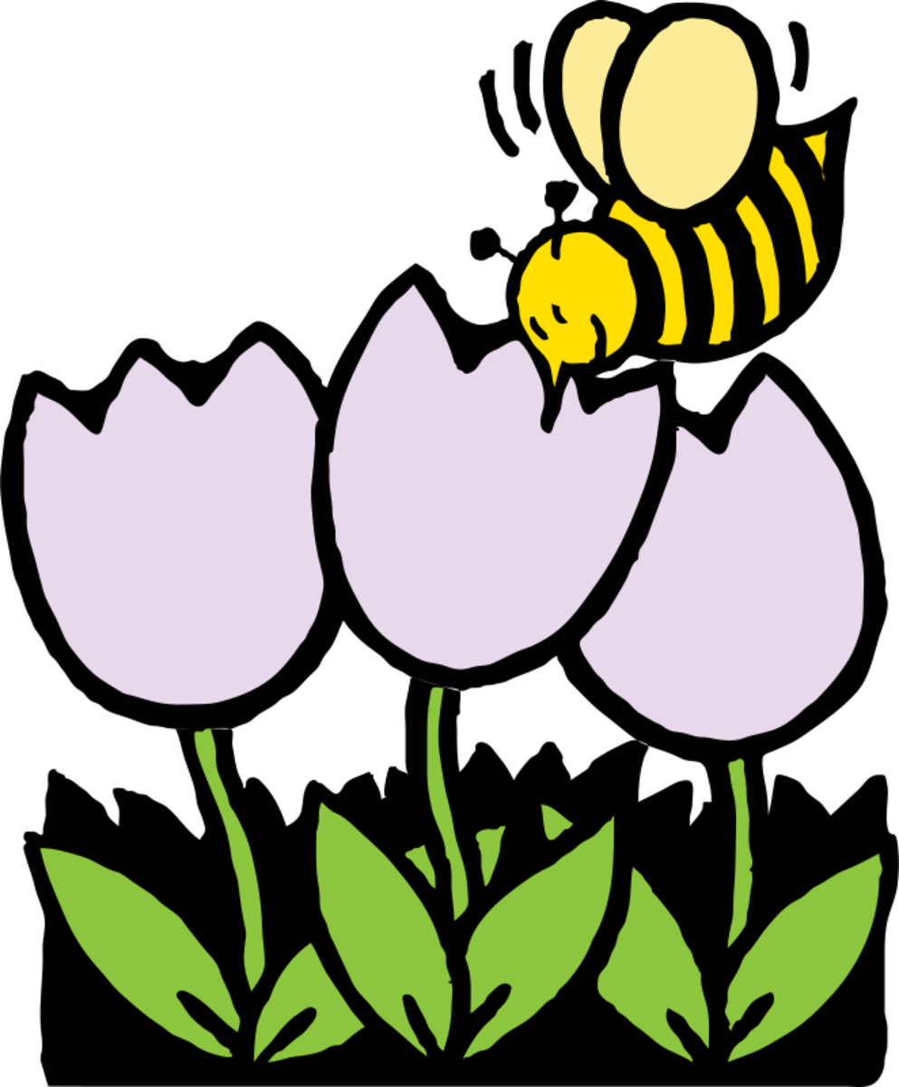 Cartoon Bumble Bee on Spring Tulips