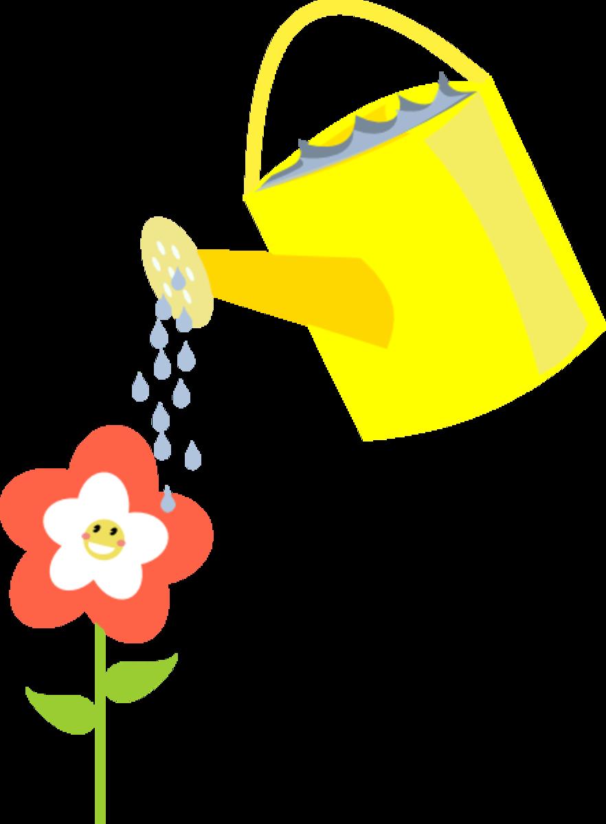 Watering Spring Flower