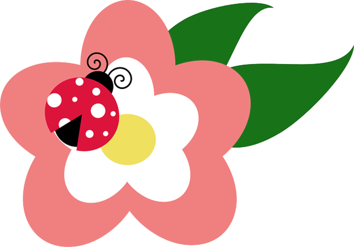Ladybug and Pink and White Flower