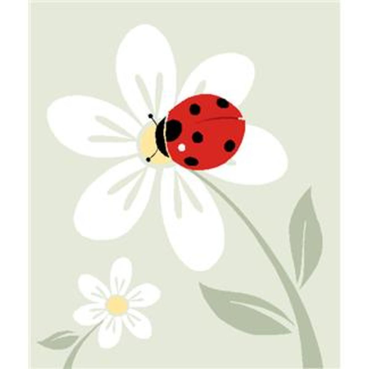 Ladybug and White Flowers