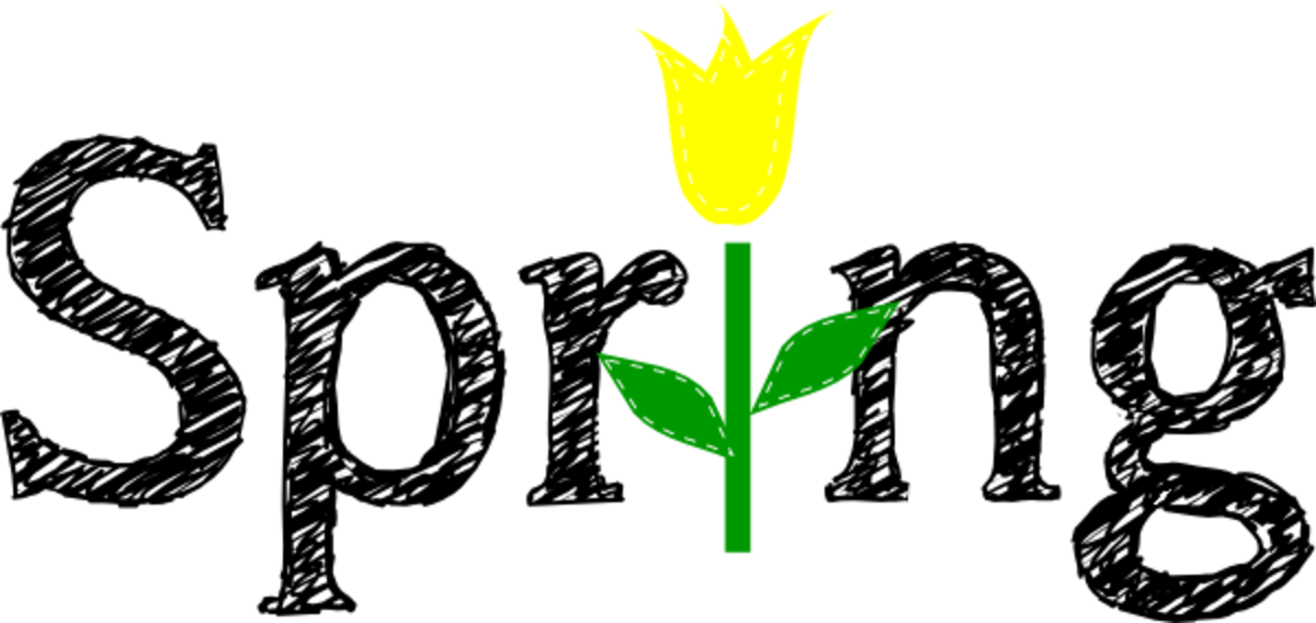 Spring with Yellow Tulip