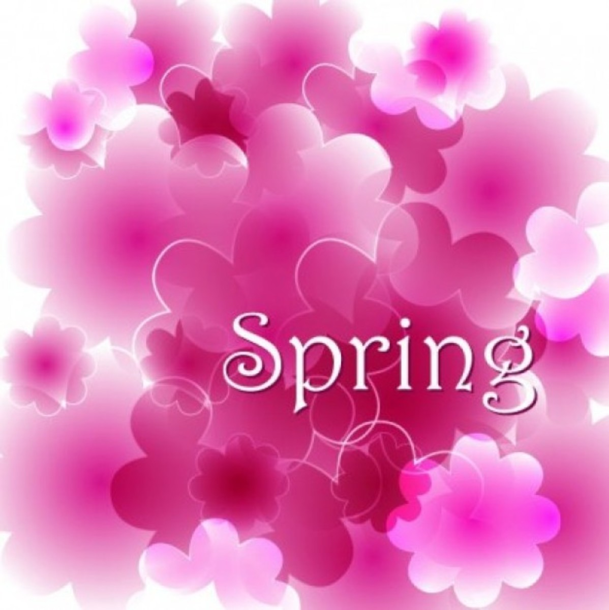 Spring with Pink Flowers