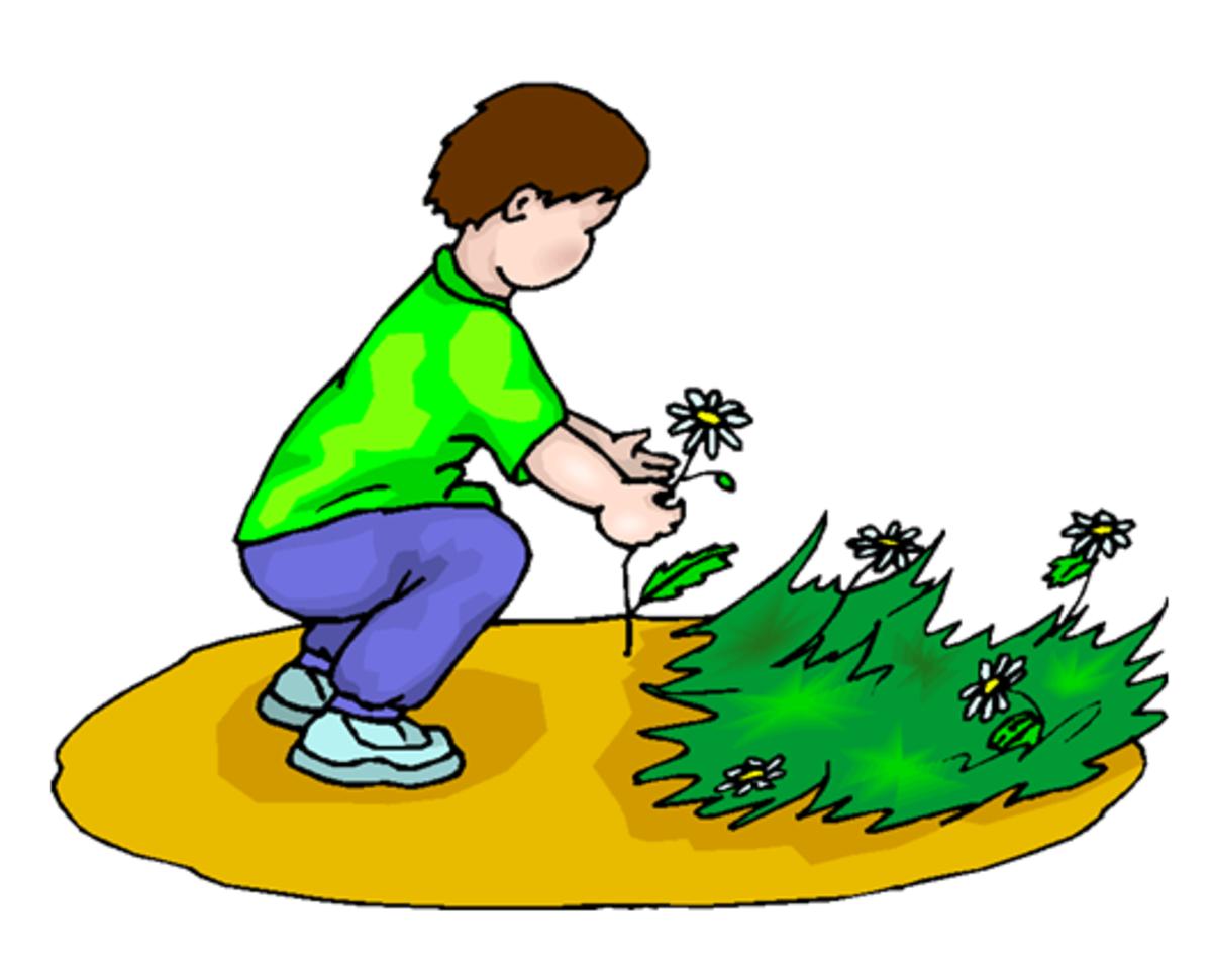 Boy Picking Spring Daisies