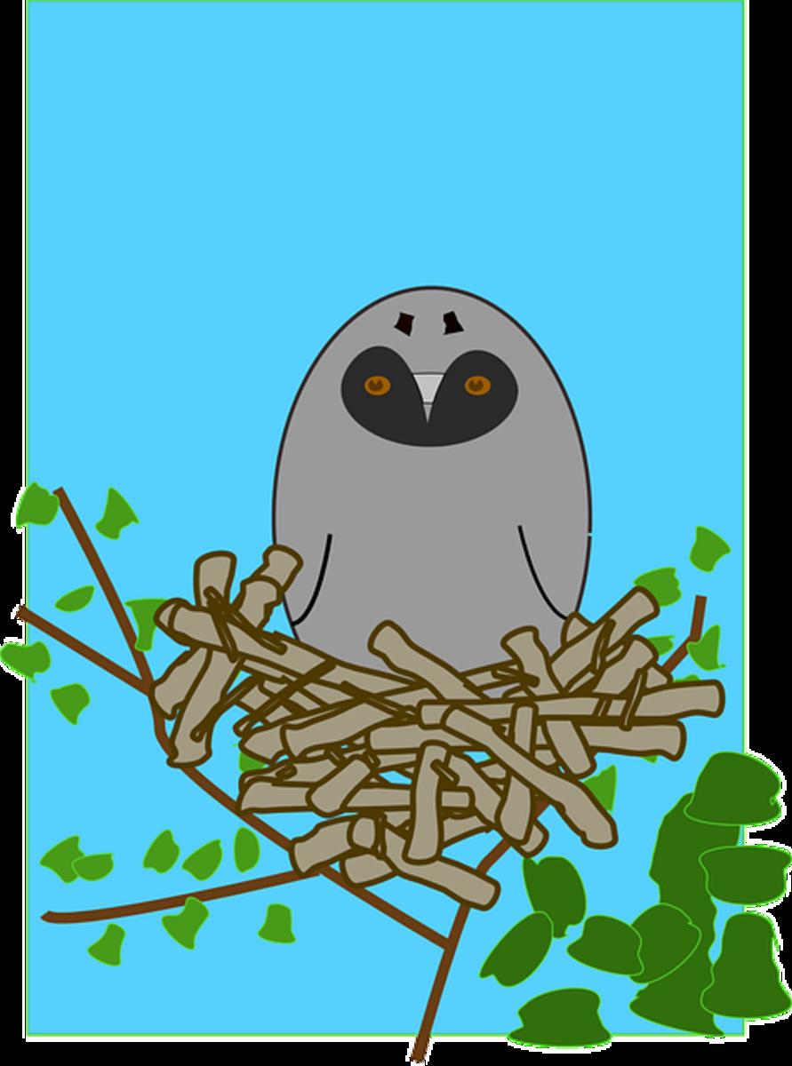 Cartoon Bird in a Nest