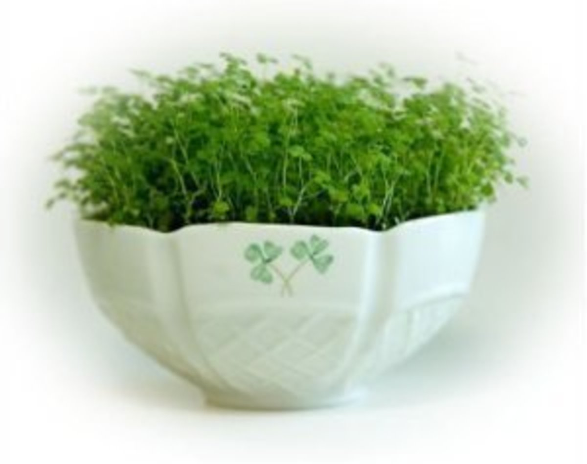 Photo of Shamrock Kit from Amazon.com