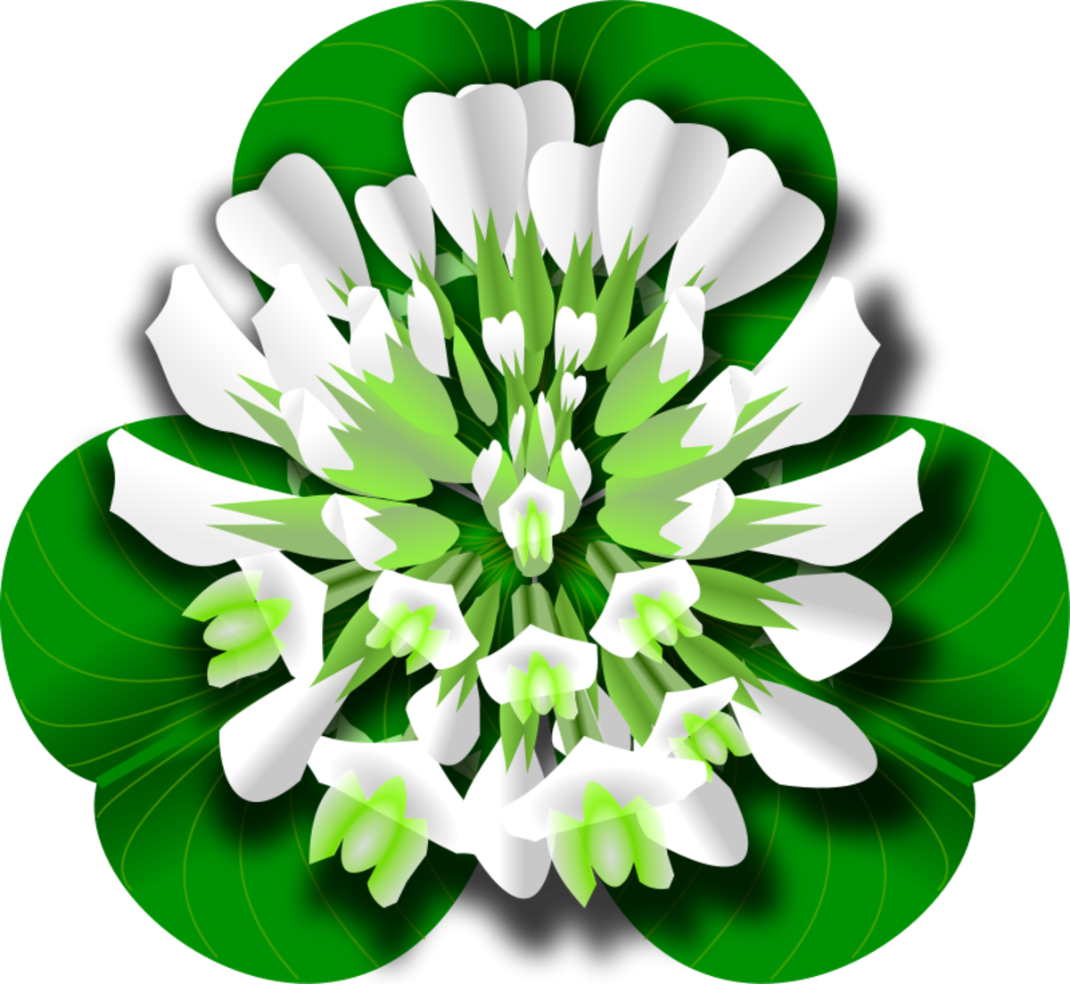 Shamrock with White Blossom
