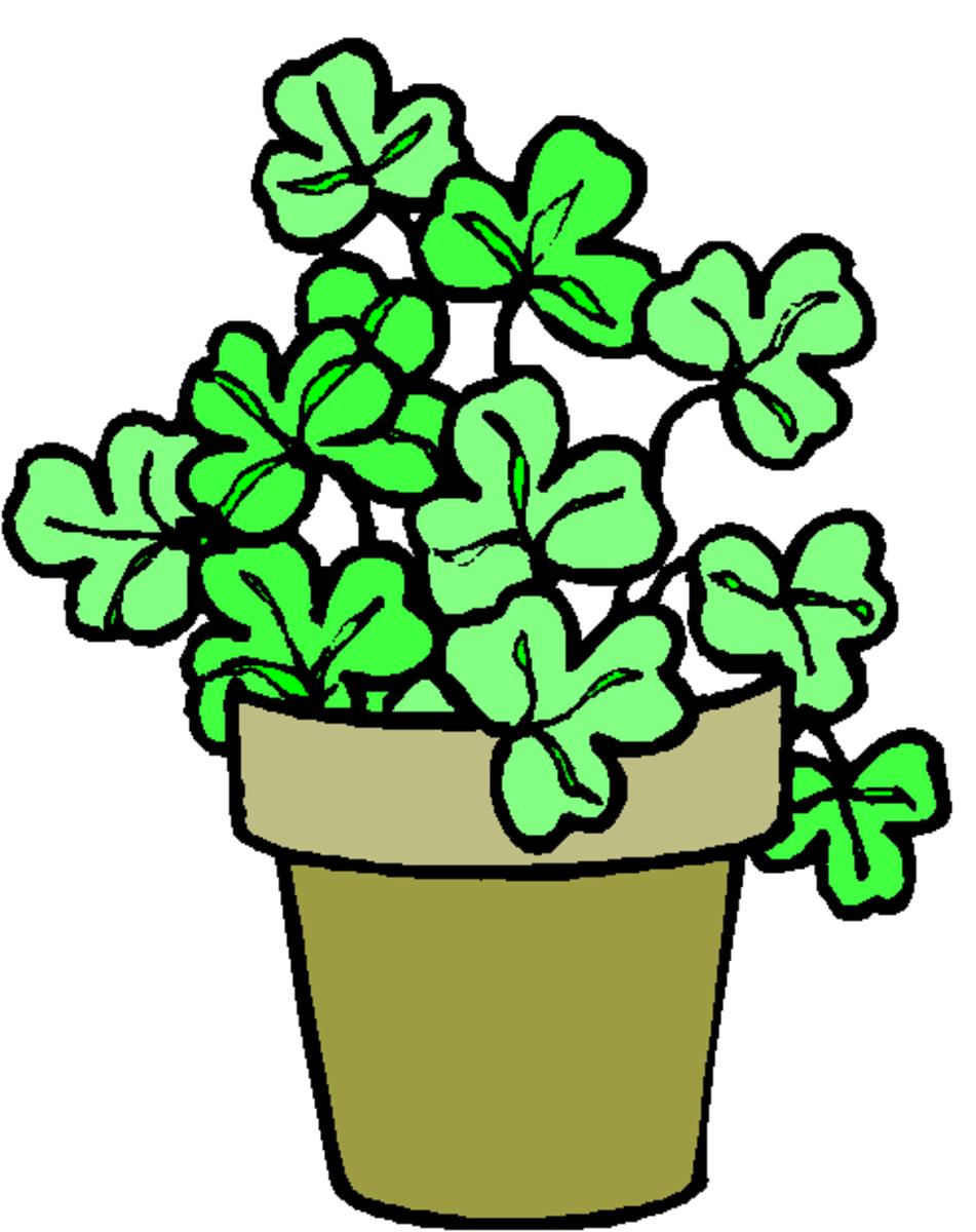 Shamrock Plant Clip Art