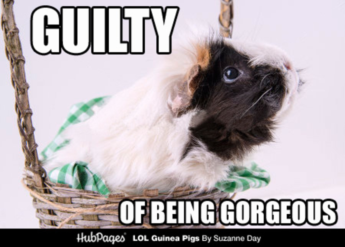 Or just gorgeously guilty.