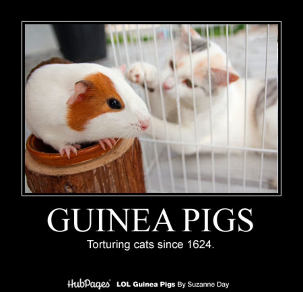 Guinea pigs were brought to Europe as pets in the 16th century.