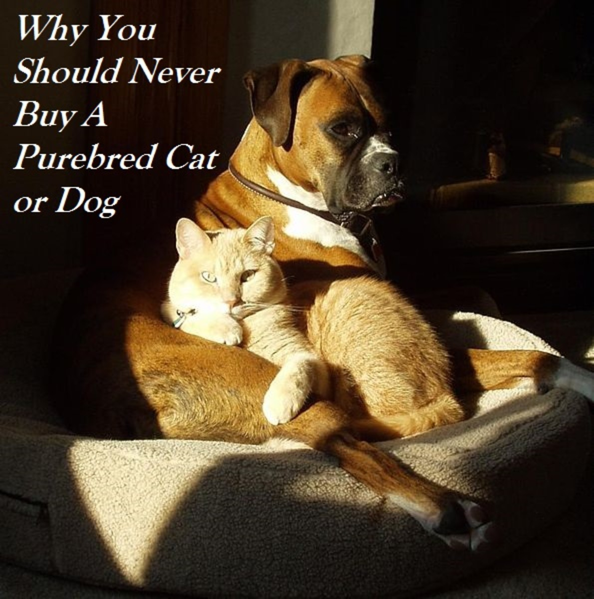 Buying a purebred cat or dogs sentences one of our millions of homeless pets to death.