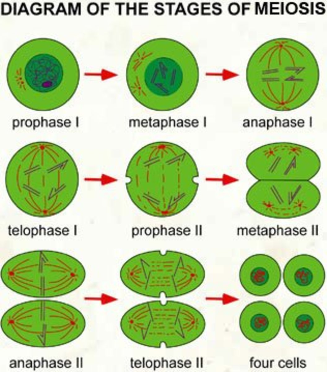 What Are The 3 Layers Of The Eye in addition Quadratic Functions Real ...