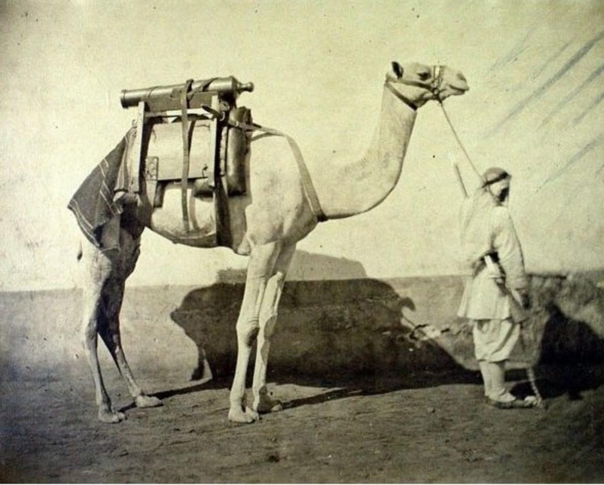 Gustave Le Gray Dromadaire d artillerie, Egypt, 1866.
