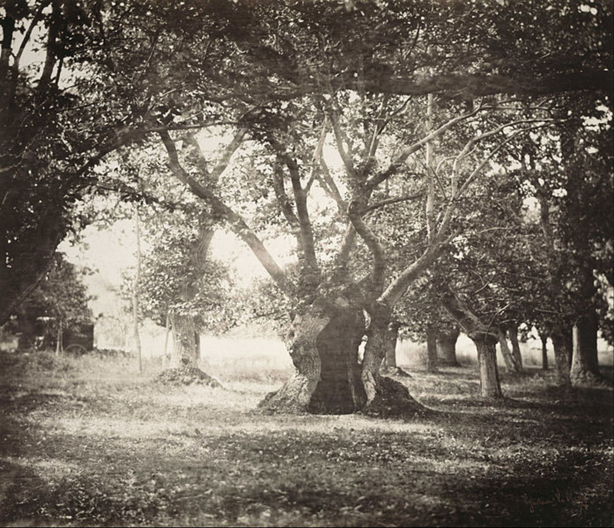 Another fascinating tree photo by Gustave Le Gray.  Taken in 1856.