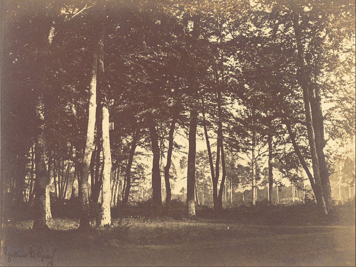 This is called Study of Trees and Pathways, done by Gustave Le Gray in 1949.  Method used is salt, from a wax calotyped negative.