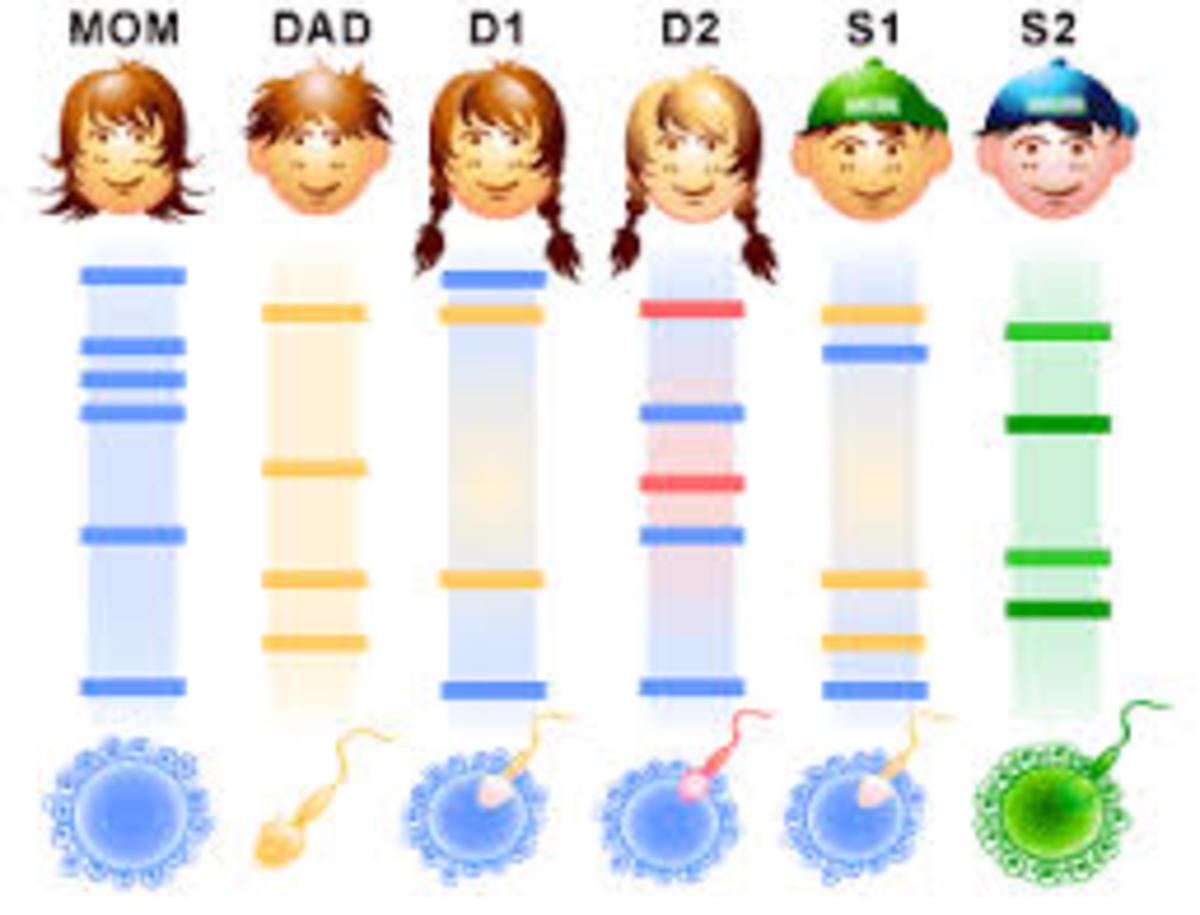 DNA Fingerprinting: Definition, Steps involved and Applications