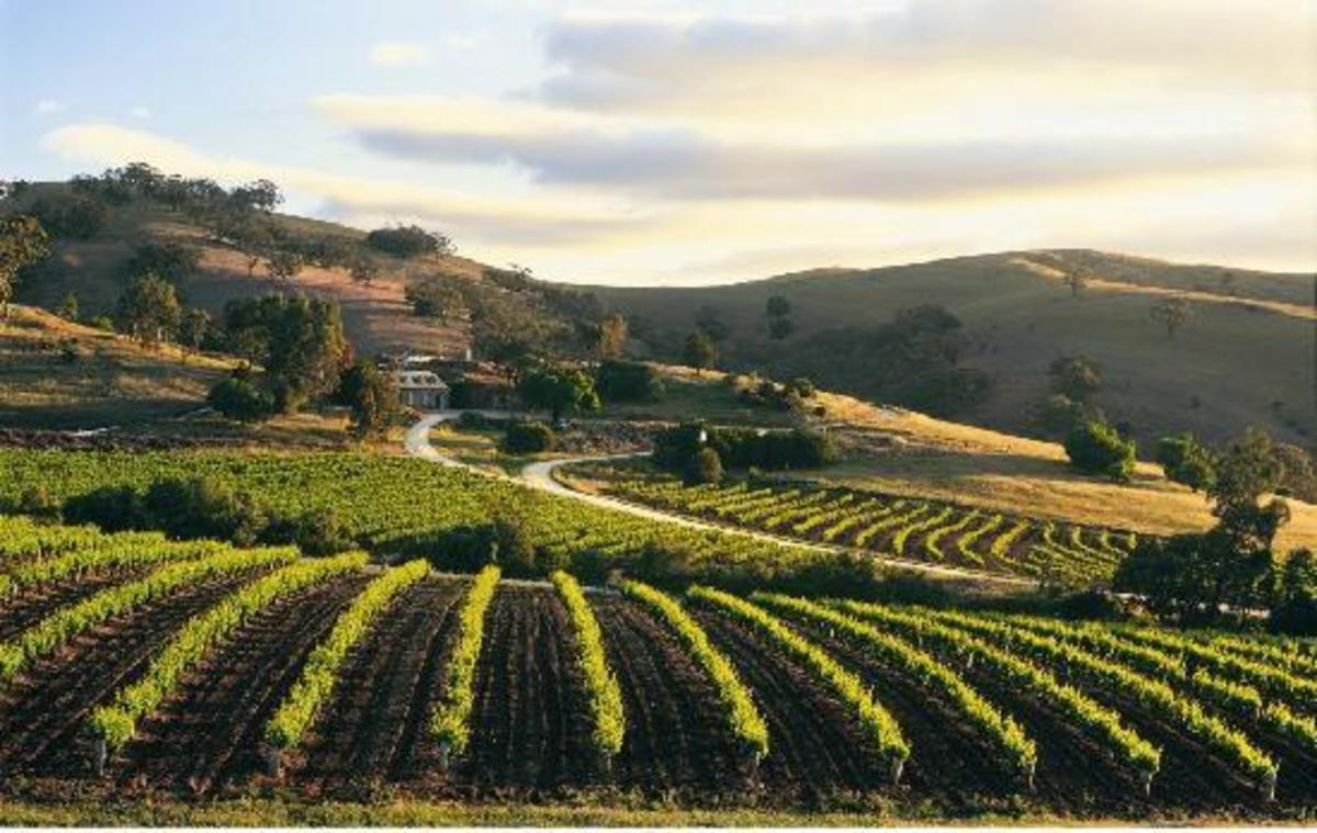 A photo of Bethany Wines vineyard at the world famous Barossa Valley in South Australia.