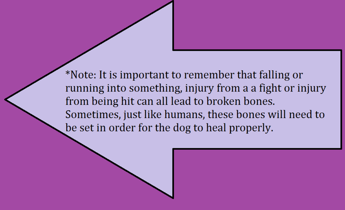 If your dog is limping, it could be a broken bone or fracture.