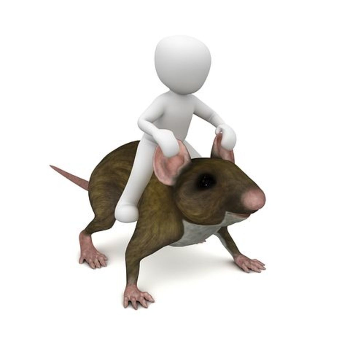 three-great-ways-to-kill-rats-in-the-home