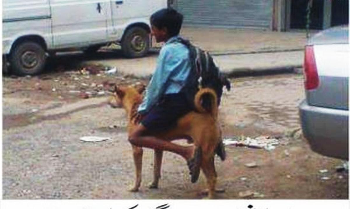 Stray Desi Pariah Dog