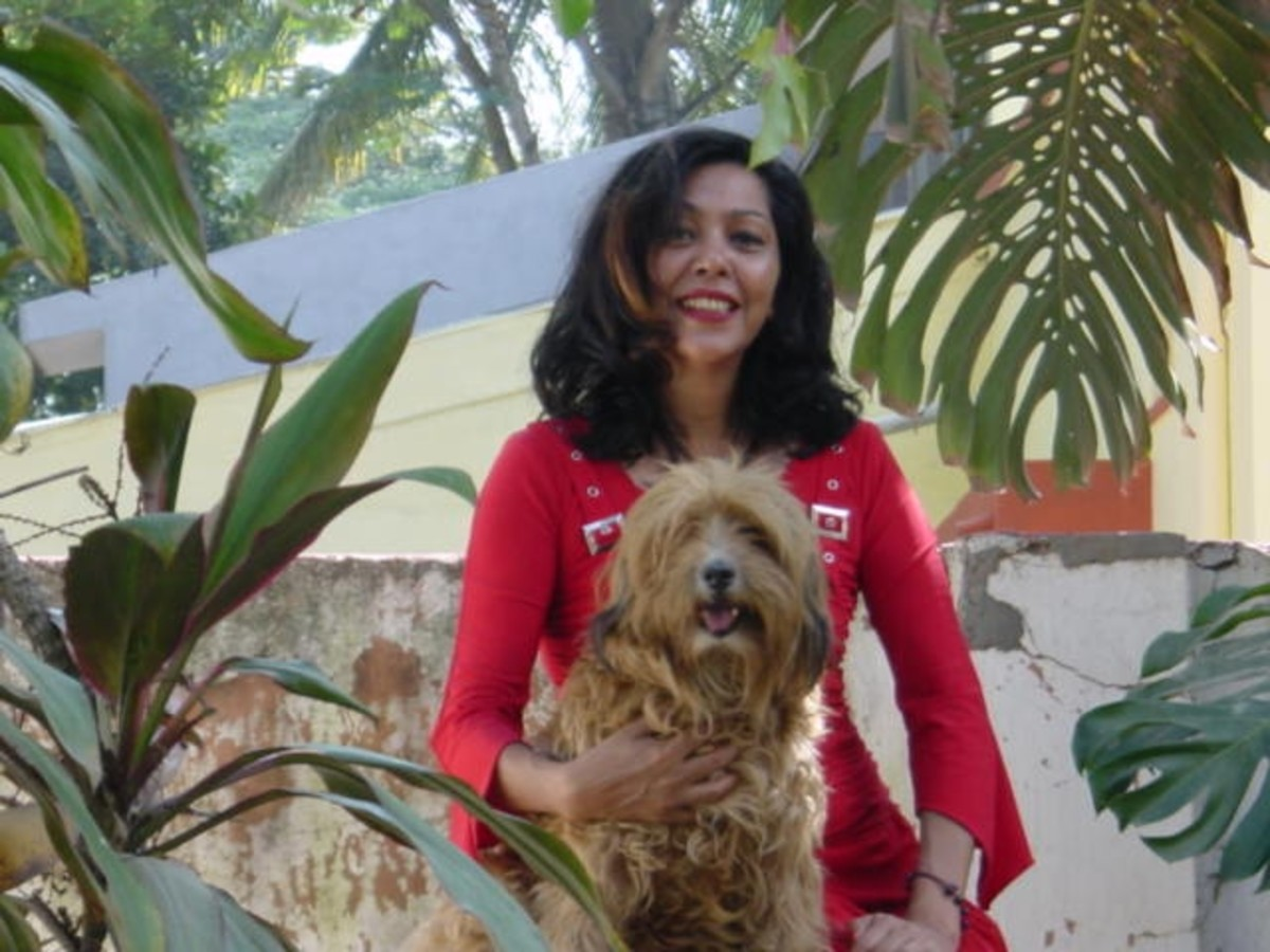 Why We Should Not Euthanize Pets- A Buddhist View