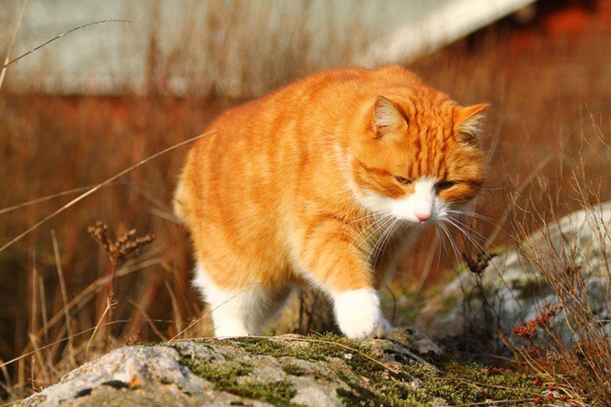 How To Deter Cats From Your Garden Or Yard Hubpages