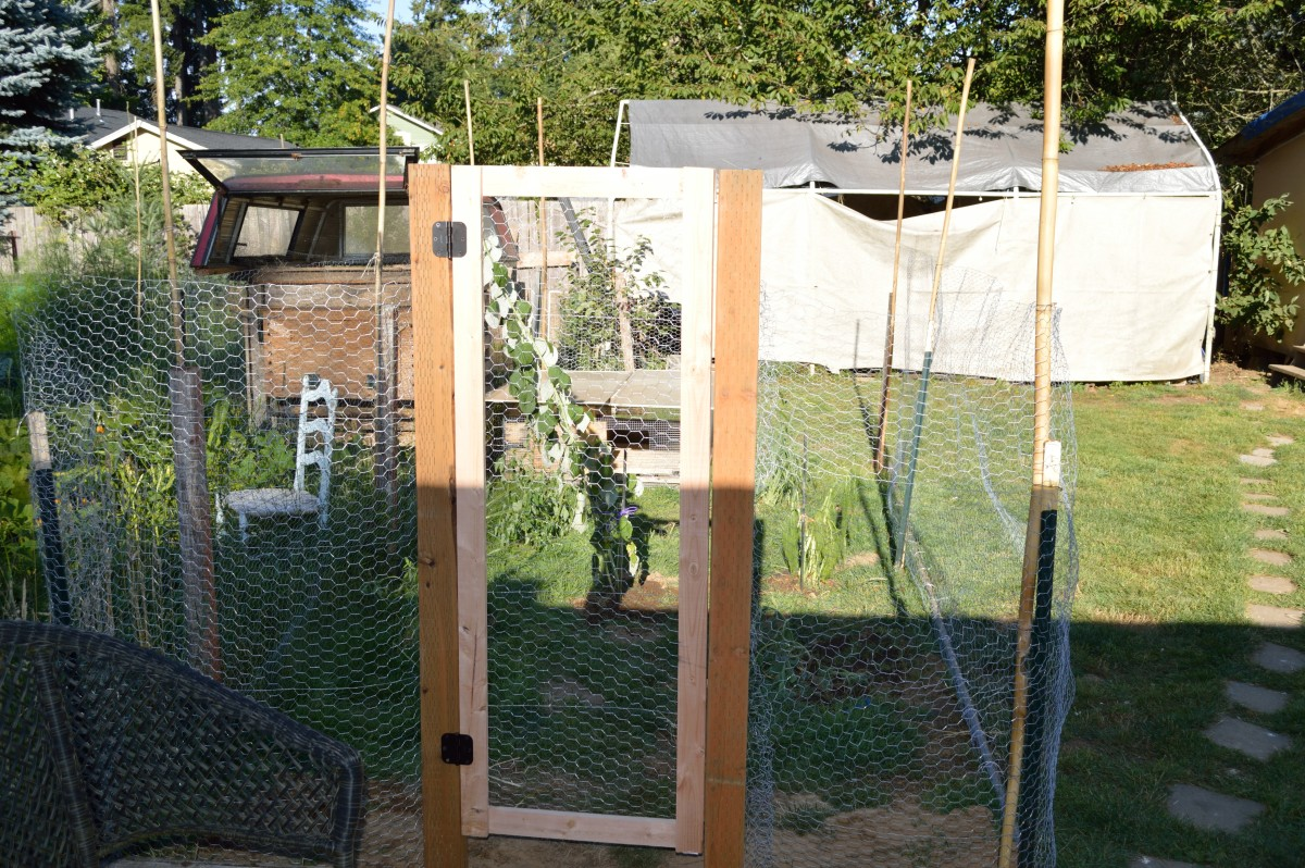 Our quail enclosure
