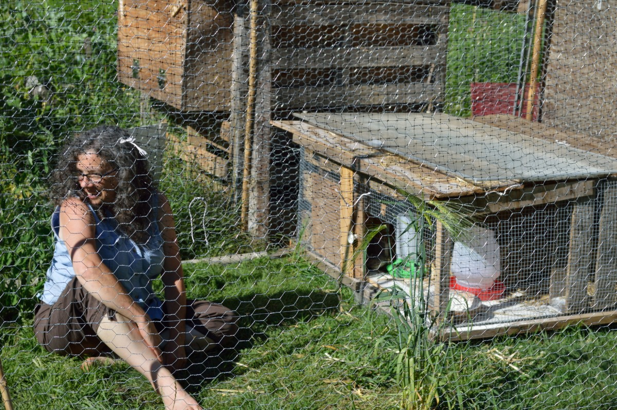 The coop inside the enclosure