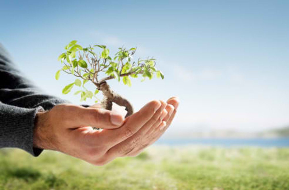 Faith in simple easy answers: Planting a tree can save Mother Earh