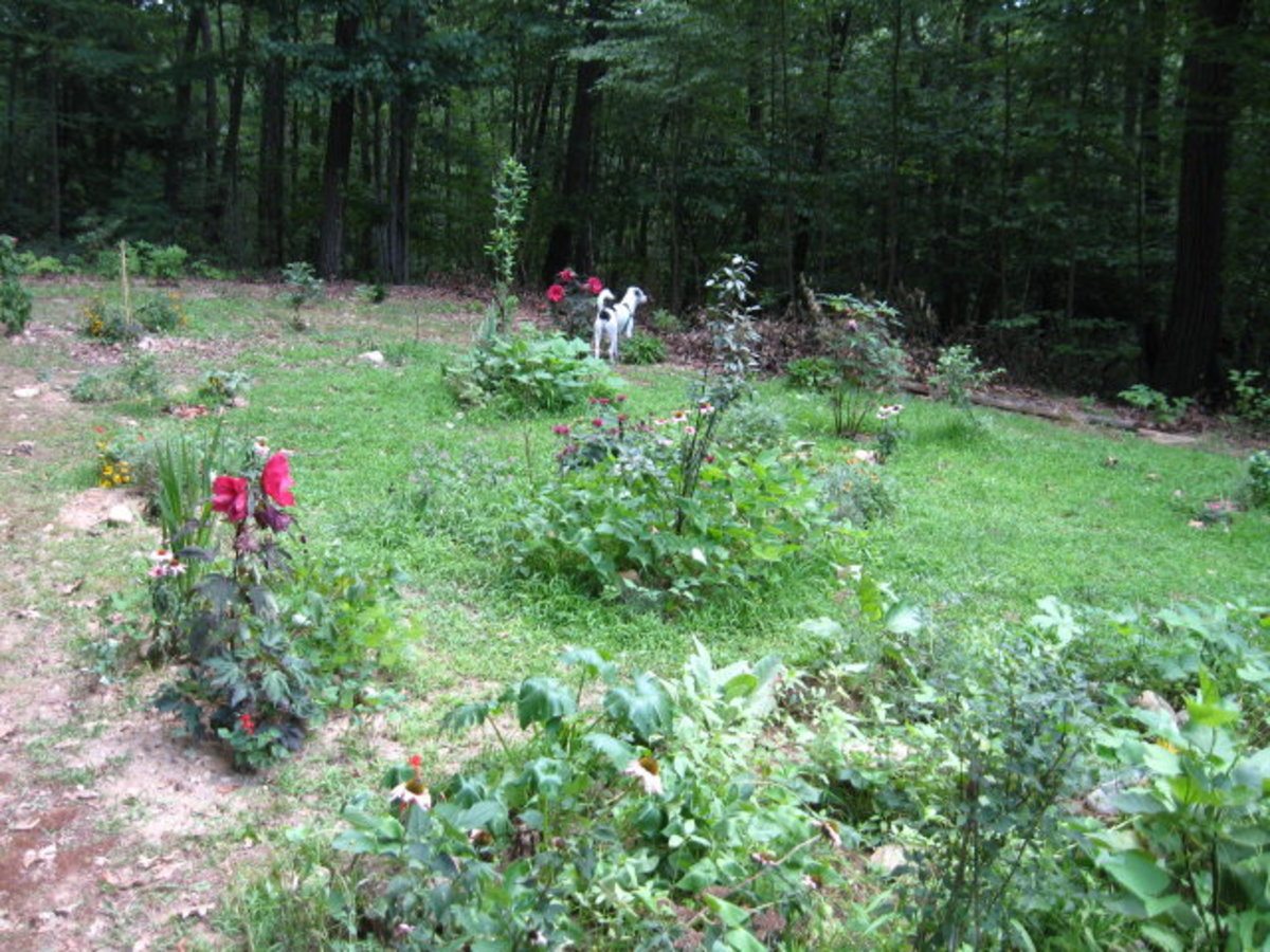 A perennial polyculture garden in its first or second year.