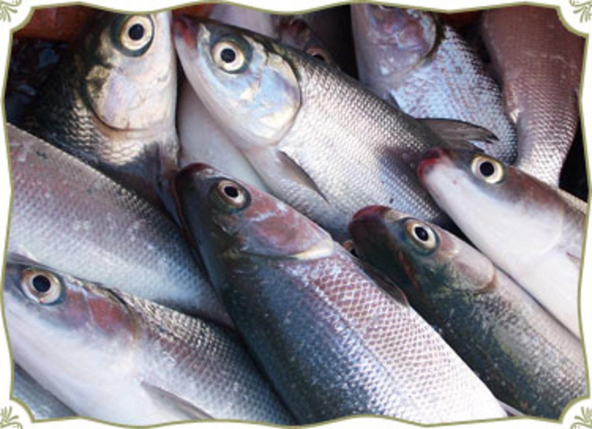 bangus(milkfish)