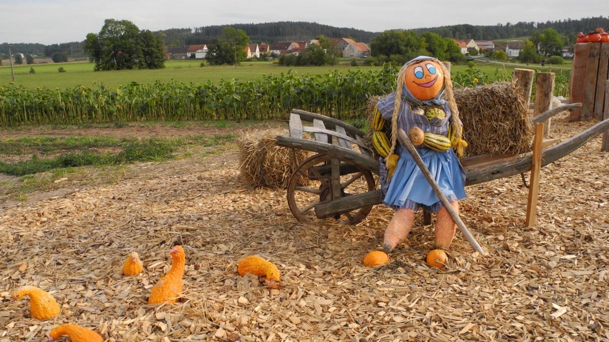 A lady scarecrow with a pumpkin head reclining against a single-wheeled wagon guarding scattered squash on the ground.