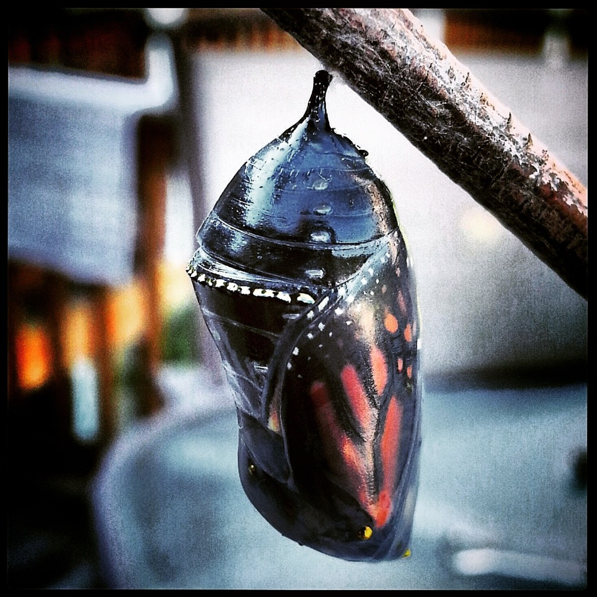 the-butterfly-effect-be-transformed-part-four