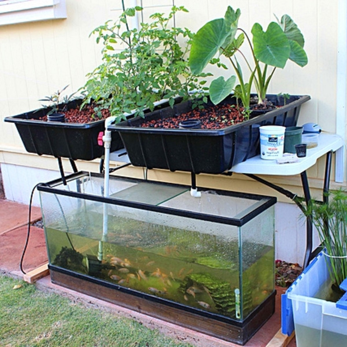 Aquaponics for a small family business