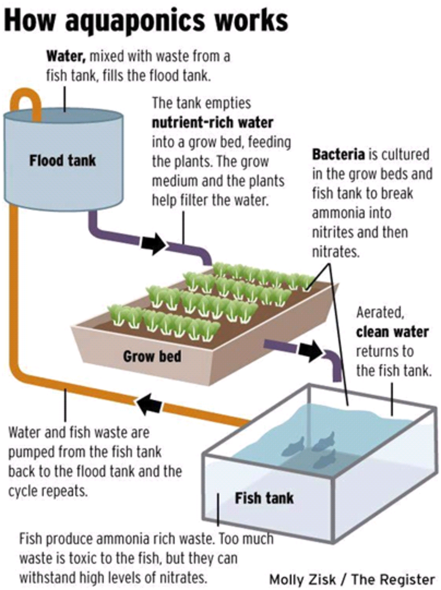 How Aquaponics System works