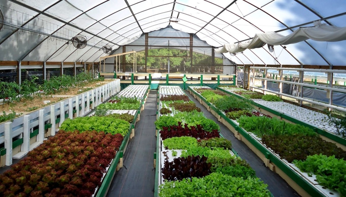 Aquaponic farming in Romania