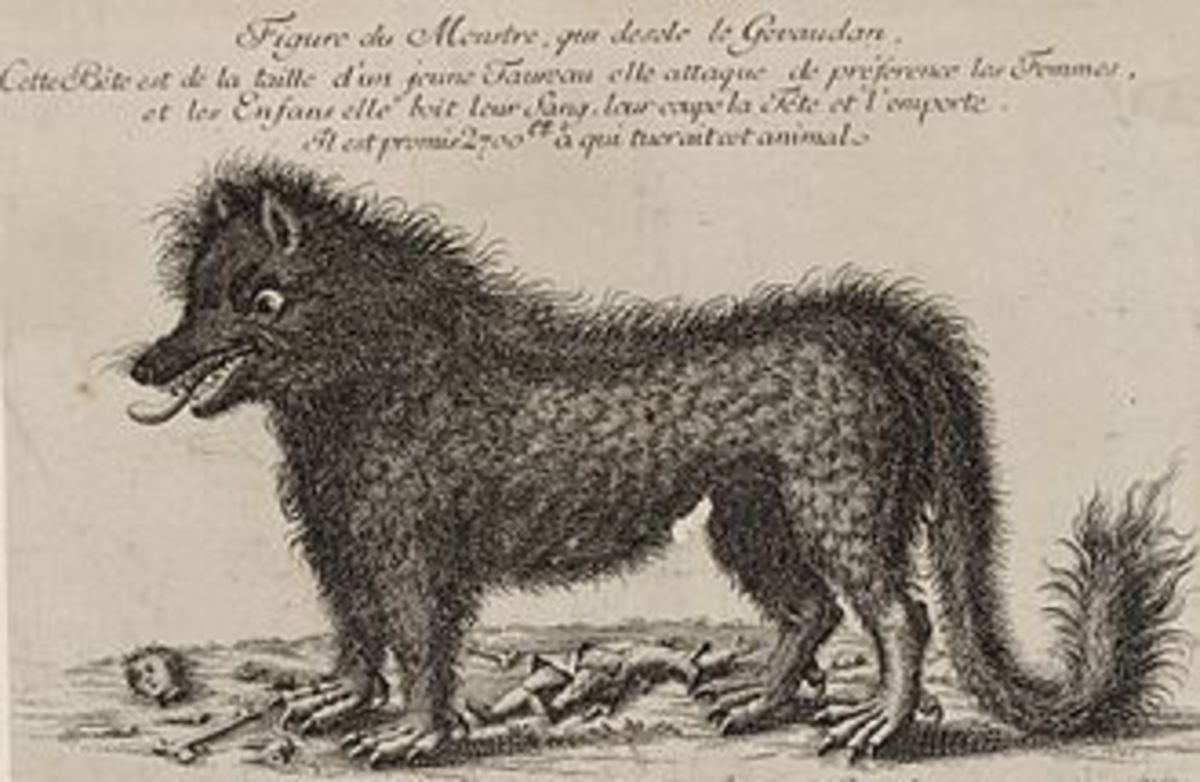 Engraving of the Beast of Gevaudan responsible for many deaths in Southern France during the late 18th Century