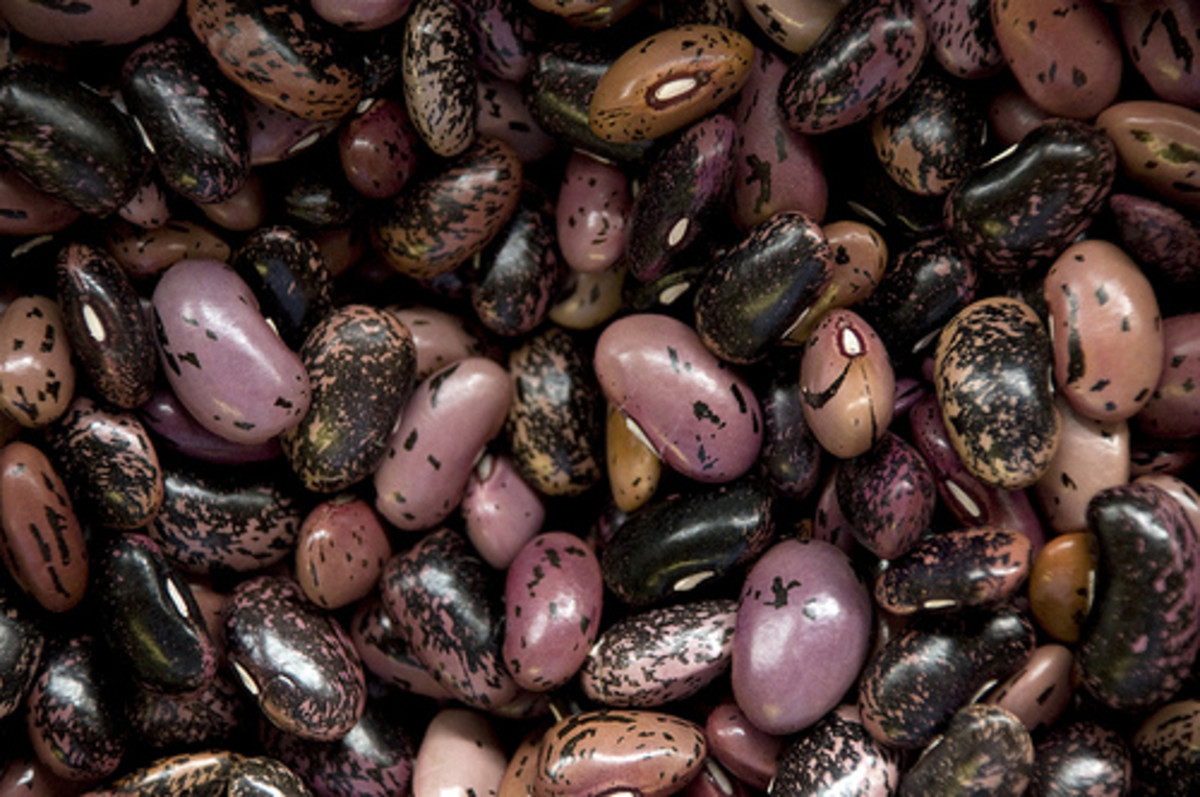 Dried beans provided protein when meat was scarce.