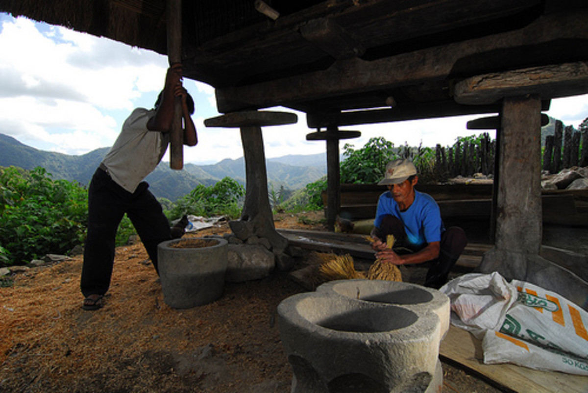 Traditional Way of Separating the Chaff from Rice Grain (Photo courtesy by Greenpeace Southeast Asia from Flickr.com)