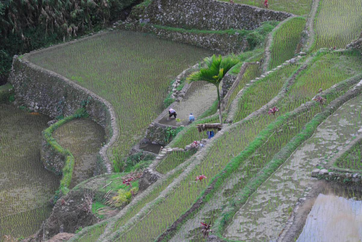 Batad Rice Terraces in Banaue (Photo courtesy by Greenpeace Southeast Asia from Flickr.com)