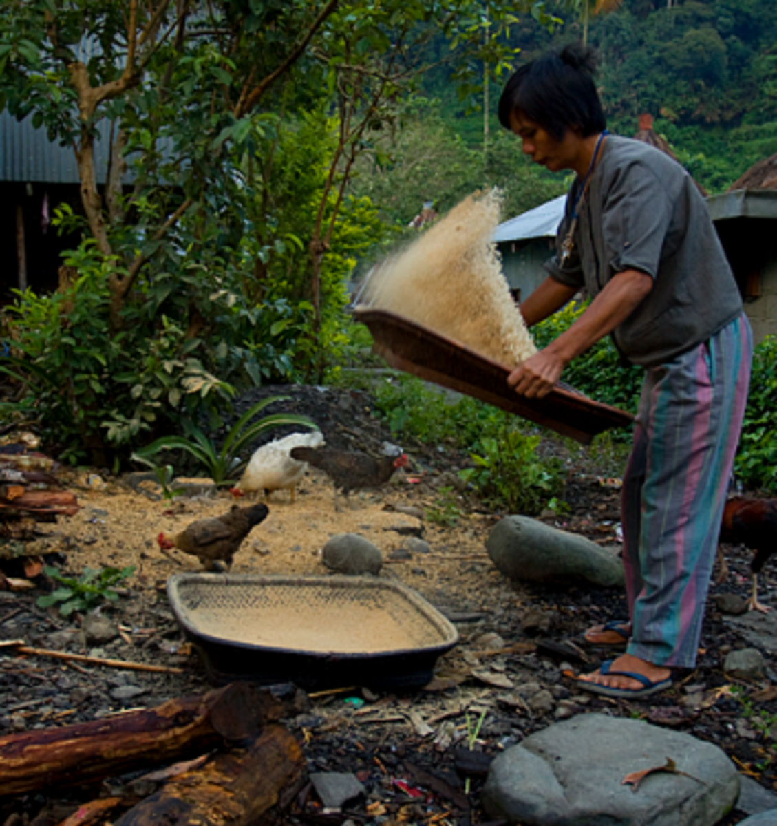 Winnowing the Rice Hull from Grain (Image Credit: AkosiSuperEdwinK from pinoyphotography.org)