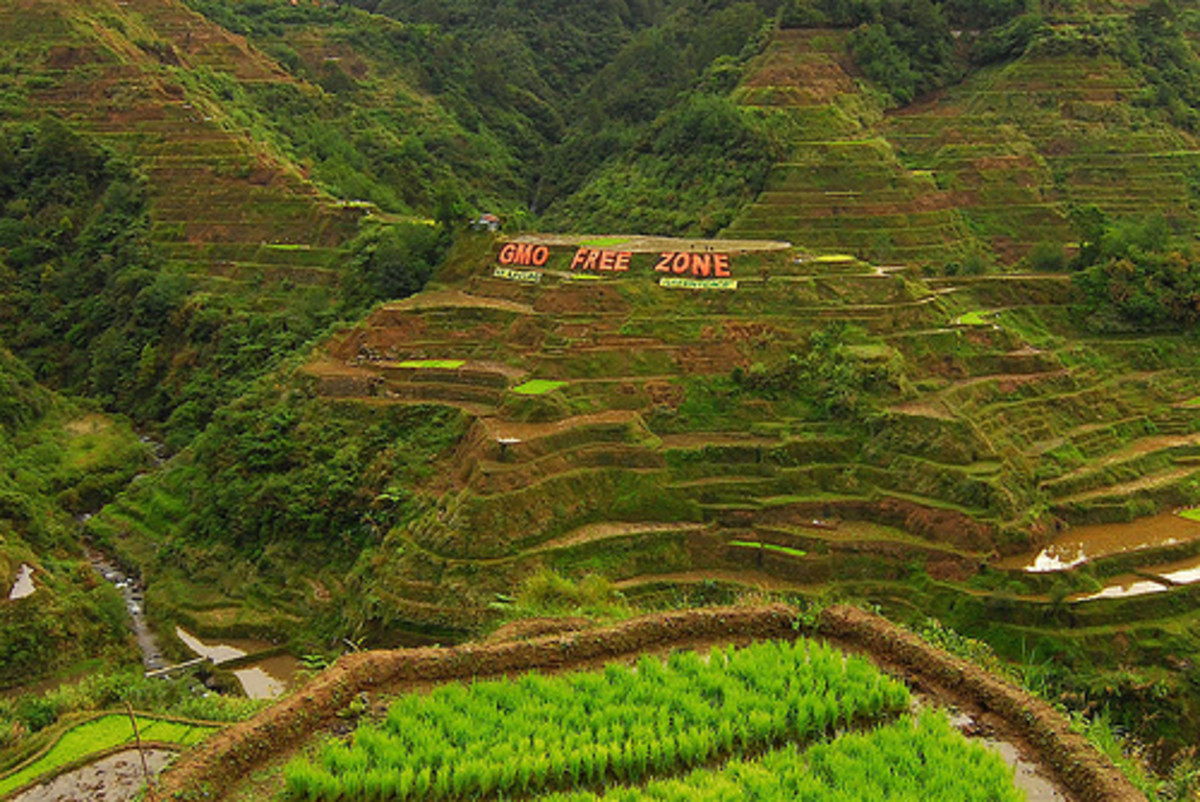 Banaue Rice Terraces - Home of Tapuy Rice Wine (Photo courtesy by Greenpeace Southeast Asia from Flickr.com)
