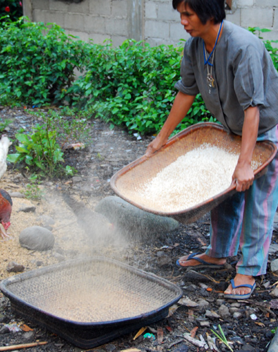 Hull Dust and Particles from Pounding the Rice must be Removed During Winnowing (Image Credit: AkosiSuperEdwinK from pinoyphotography.org)